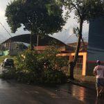 Ventos fortes durante chuva derrubam árvores e destelham casas